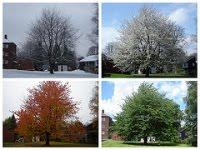 Un arbre, 4 saisons, le modèle de Frederic Hudson