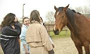 Groupe avec un cheval pendant une séance d'équicoaching