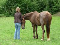 Femme dans un pré avec un cheval