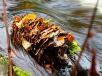 Tas de feuilles bloquées dans une rivière