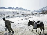 Homme tirant un âne
