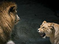 Intention et non verbal (cc) certains droits réservés par TomConger - Flickr