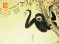 Gibbon dans un arbre