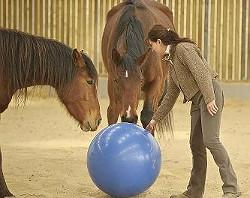 Florentine van Thiel et ses chevaux - photo de Nathalie Hupin