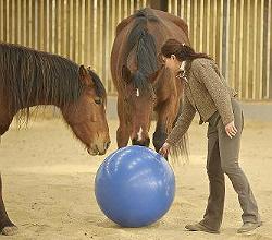 Florentine van Thiel jouant avec ses chevaux avec un ballon