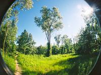 Pré et arbres