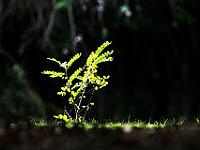 Plante éclairée par le soleil dans une forêt sombre