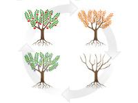 4 saisons, l'arbre dans ses 4 états