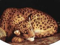 Léopard endormi