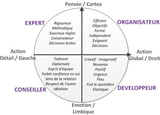 Cerveau - 4 quadrants et leurs caractéristiques