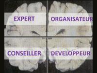 Nos préférences cérébrales